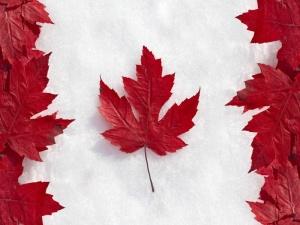 Лист клена - эмблема Канады